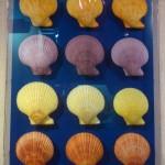 Интересные места Пхукета: музей морских ракушек