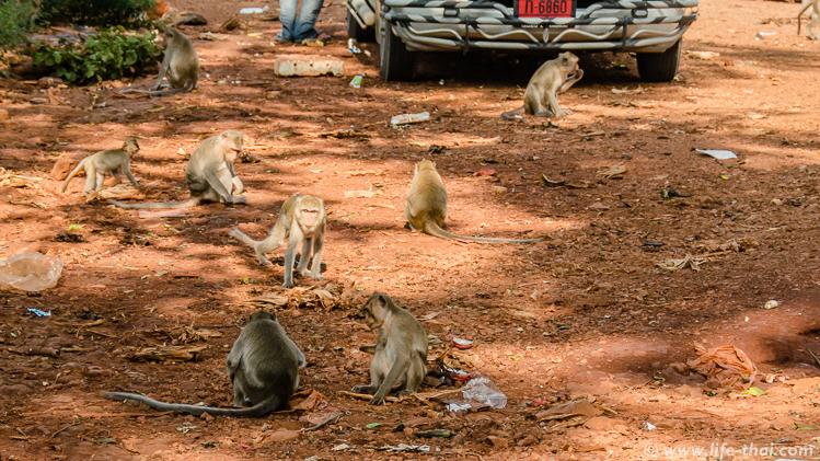 Обезьяны в Канчанабури, Таиланд