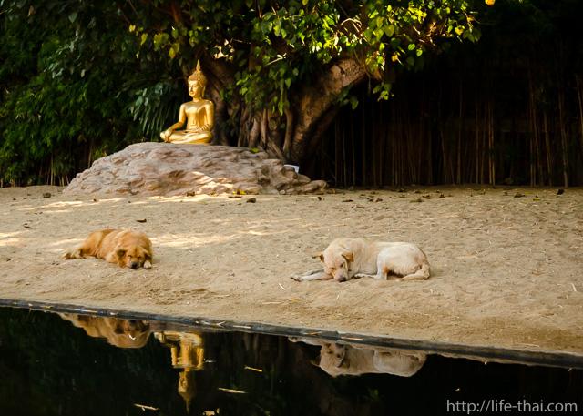 Статуя Будды под охраной, Phan Tao, Чианг Май