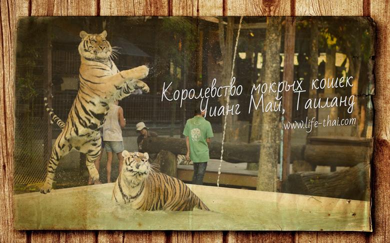 Тигриное королевство в Чианг Мае, Таиланд, фото