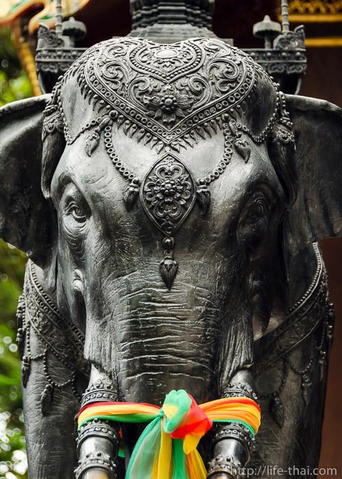 Слон, Дои Сутхеп, Чианг Май, Таиланд