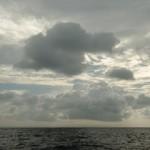 Как люди на китов блевали