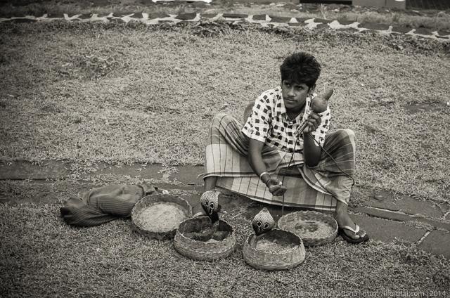 заклинатель змей, форт, Галле, Шри Ланка