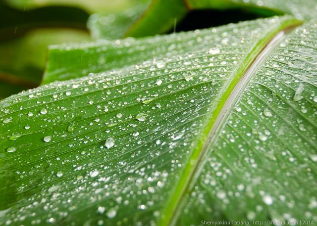 Дождь, Шри Ланка