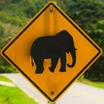 5 причин сделать водительские права в Таиланде