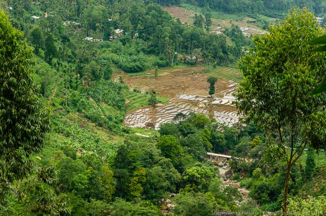 ฺЧайные плантации, Шри Ланка