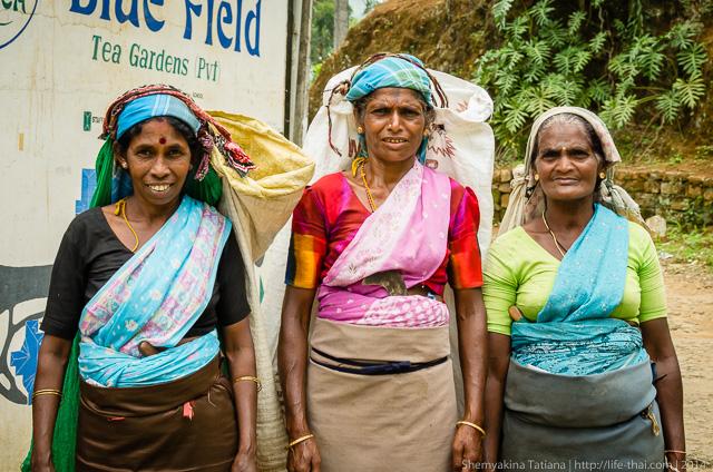 Женщины на чайных плантациях, Шри Ланка