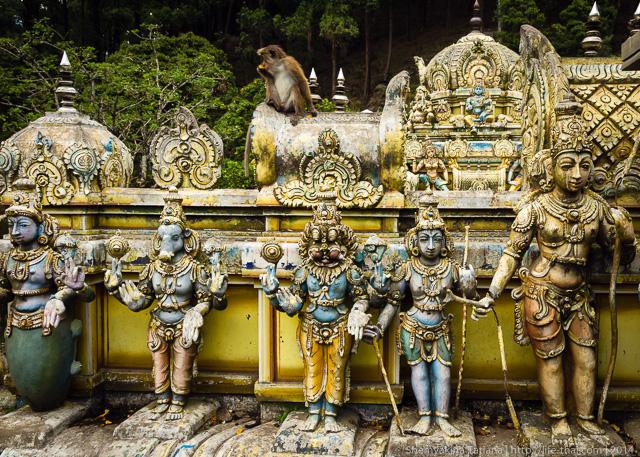 Обезьяны на храме, Шри Ланка