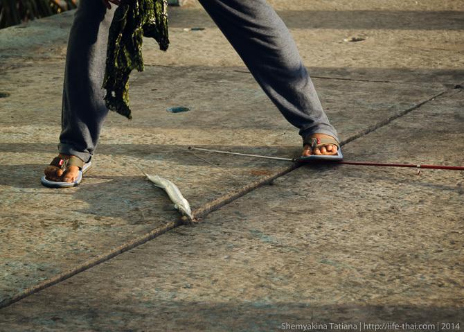 Рыбак и рыбка, Мальдивы