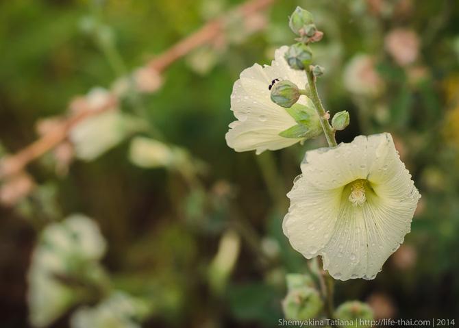 Цветы, Керчь, Крым