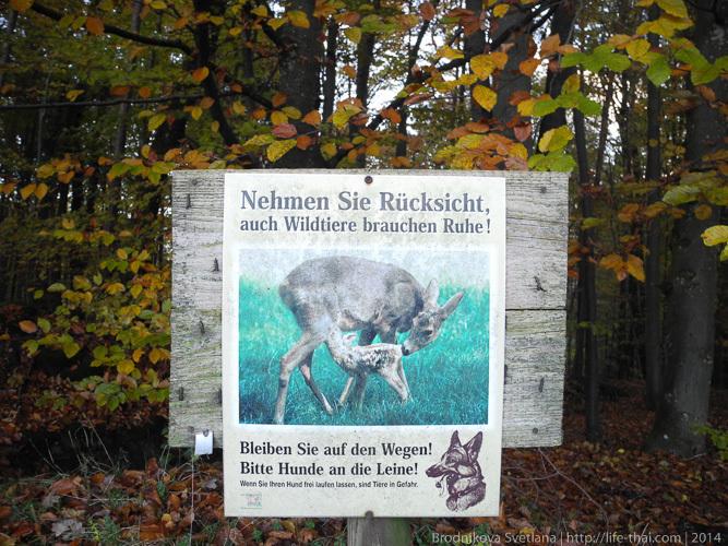 Олени в Австрии