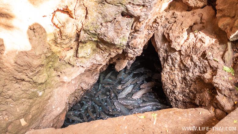 Пещера с рыбами в Tham Pla National Park Namtok Pha Suea