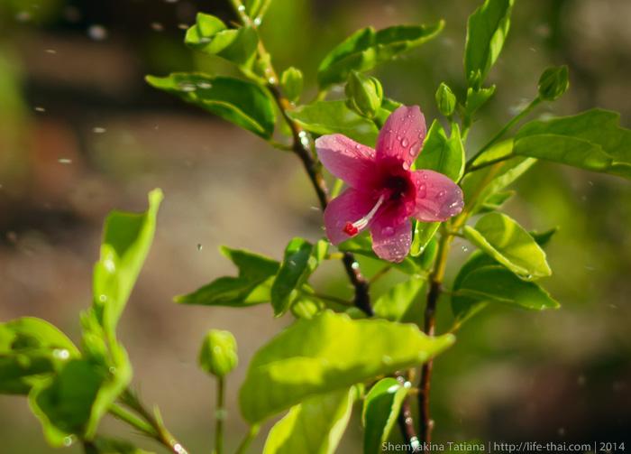Цветы, Таиланд