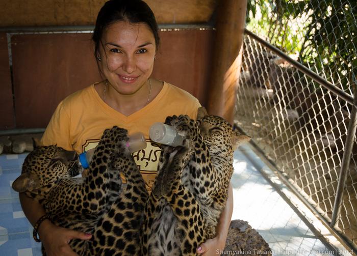 Леопарды, Канчанабури Сафари Парк