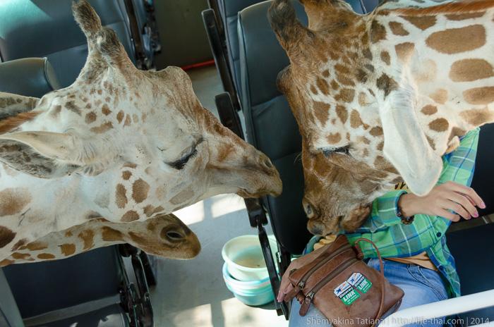 Жираф, Канчанабури Сафари Парк