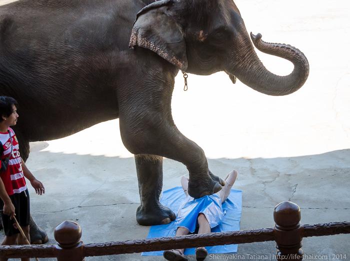 Слон делает массаж, Канчанабури Сафари парк, Таиланд