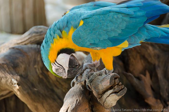 Попугаи, Канчанабури Сафари Парк