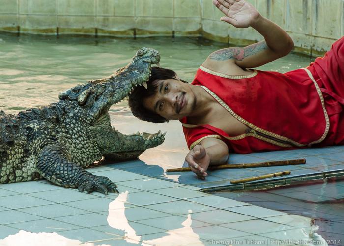 Крокодил, Канчанабури сафари парк, Таиланд