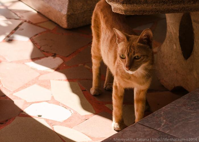 Рыжий кот, Лаос