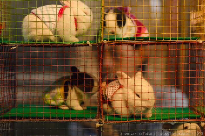 Кролики, Родфаи маркет, Бангкок
