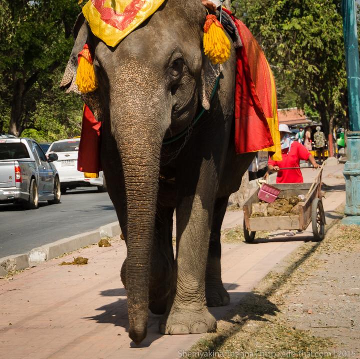 Слоны, Аюттайя, Таиланд