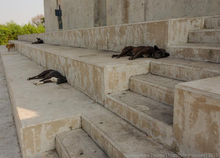 Тайские собаки, Мега мост, Бангкок, Таиланд