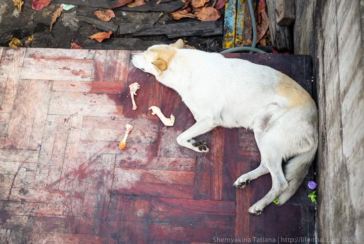 Бангкок, уличная собака