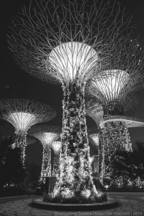 Сады у моря, Сингапур