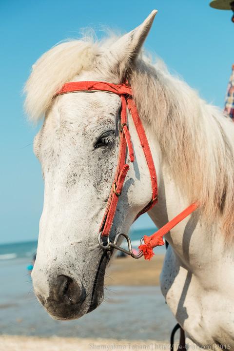 Лошадь, Таиланд