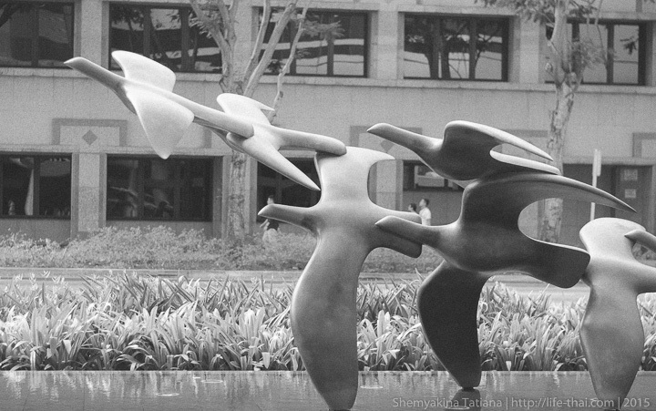 Гуси-утки, Сингапур