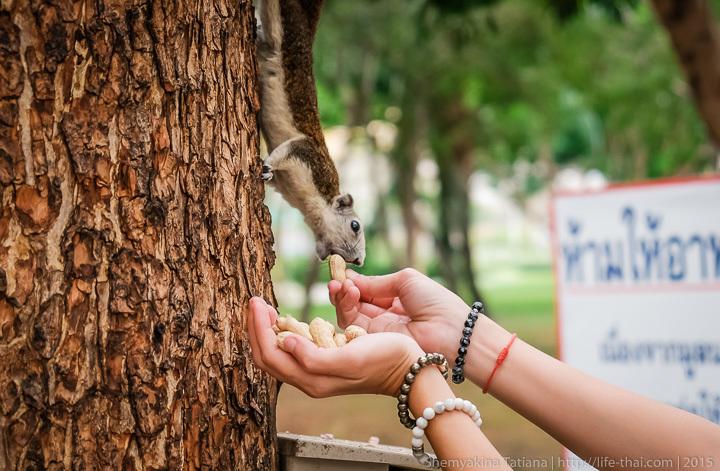 Парк Белки в парке Чатучак, Бангкок, Таиланд