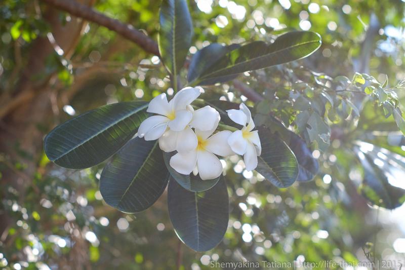 Цветы, фото на Супер Такумар 55