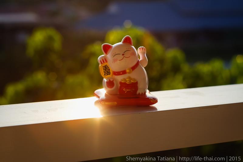 Манящий кот, фото на Супер Такумар 55