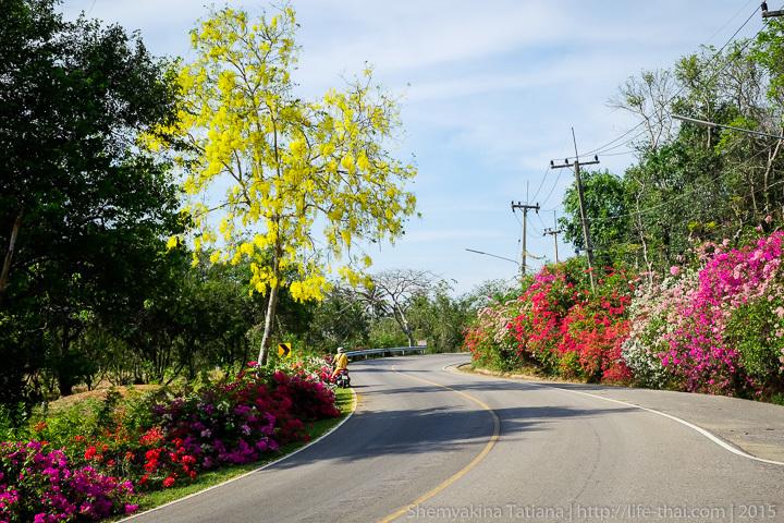Хуа Хин, цветы на обочинах дороги в Хуа Хине