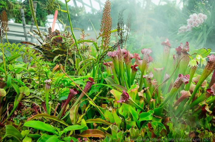 Cloud Forest, Сады у залива, Сингапур фото