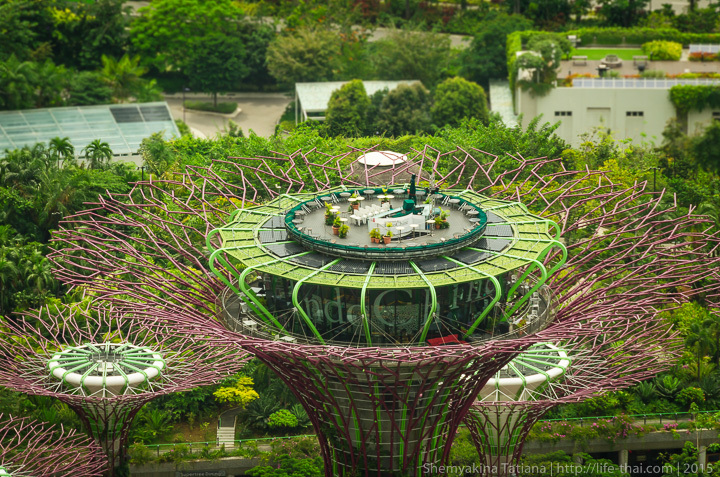 Супер-деревья, Сингапур