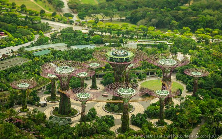 Супер-деревья, Сингапур, фото