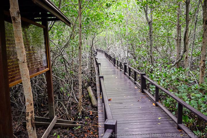 Мангровая роща, Пранбури, Таиланд