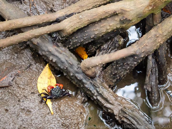 Краб, мангровая роща, Хуа Хин