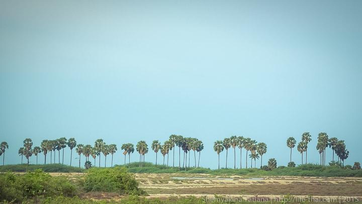 Пальмы, Хуа Хин