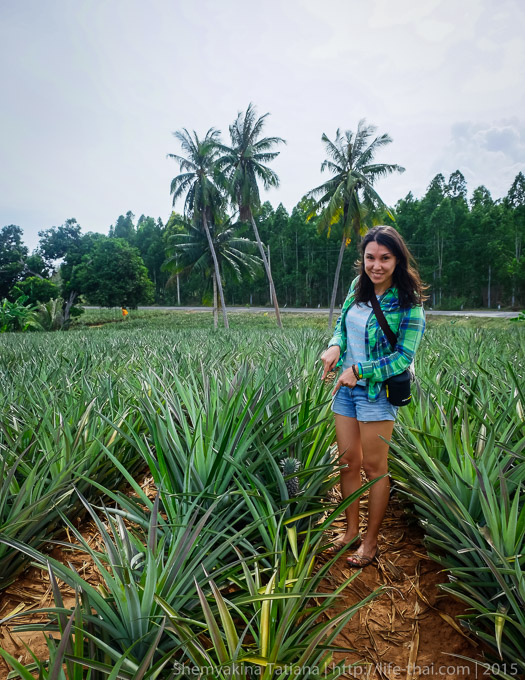 Ананасовые плантации, Хуа Хин, Таиланд