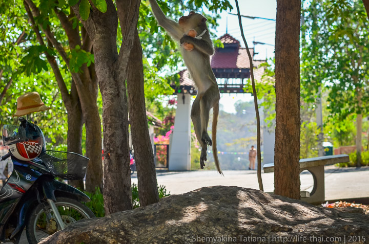 Левитирующая обезьяна, Хуа Хин
