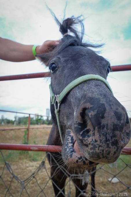 Пони, Страусовая ферма в Керчи