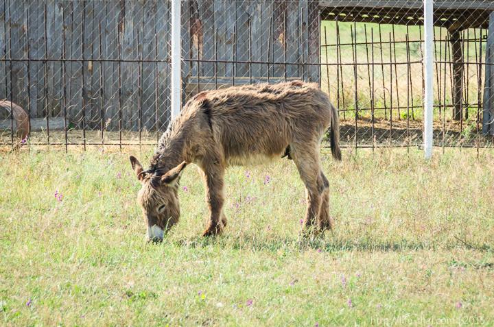 ферма страусов в Керчи