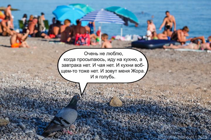 Голубь Жора, Мыс Айя, Крым