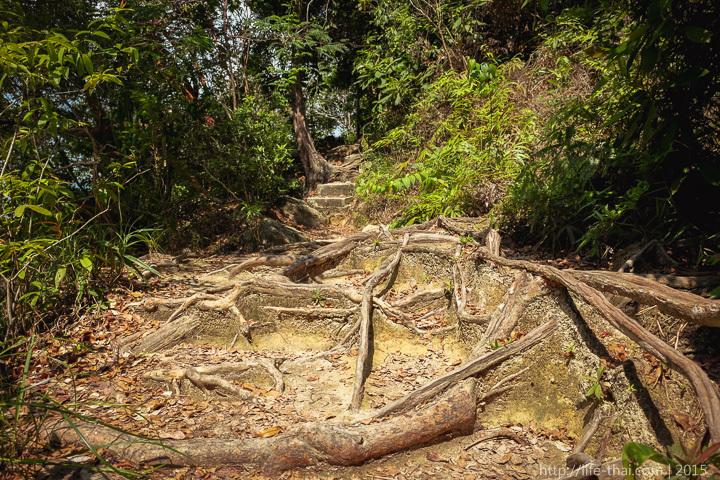 Джунгли Пенанга, Малайзия