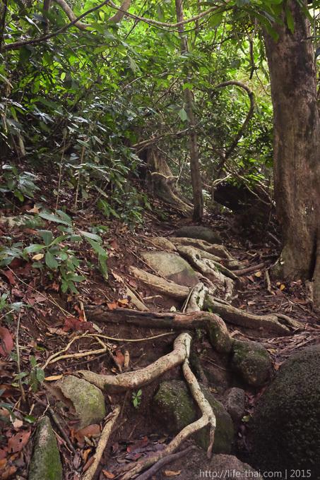 Остров Пенанг, прогулка по джунглям