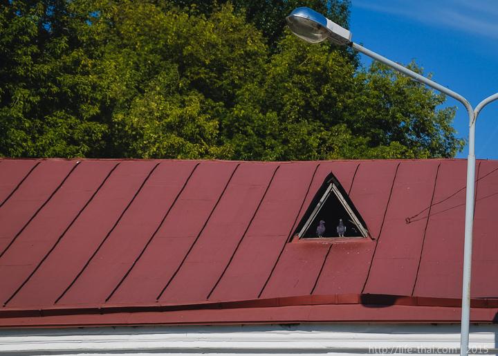 Голуби на крыше, Витебск
