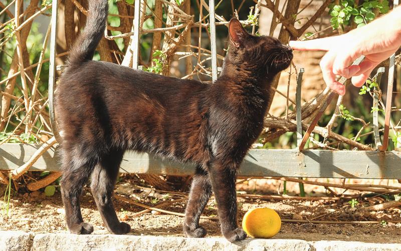 Будванские кошечки, Черногория