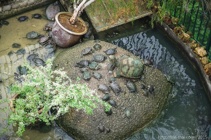 Черепаховая ферма, Пенанг, Малайзия
